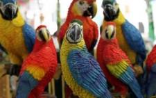 Αποκωδικοποιήθηκε ο μηχανισμός ομιλίας των παπαγάλων;