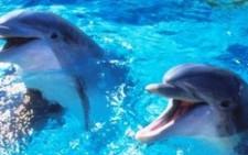 «Στοπ» στις σεισμικές έρευνες για προστασία των δελφινιών