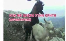Σοκ με βοσκό στην Κρήτη (βίντεο) - 'Τραγίλα'
